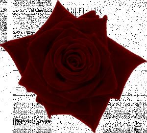 Twinky_DarkCravings_Rose3
